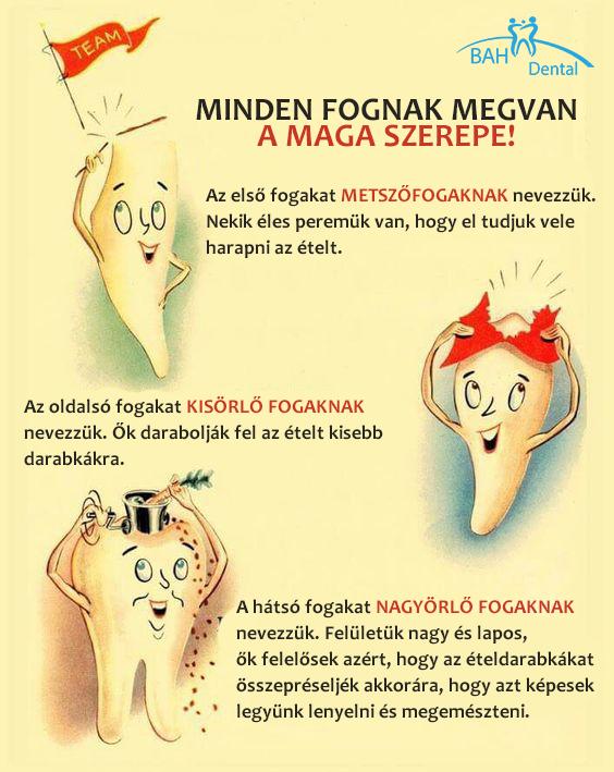 fogak szerepe infografika